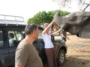 Claire et les elephants